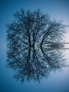 reflecting photo of bare tree on focus photography